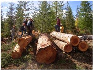 logging-operation